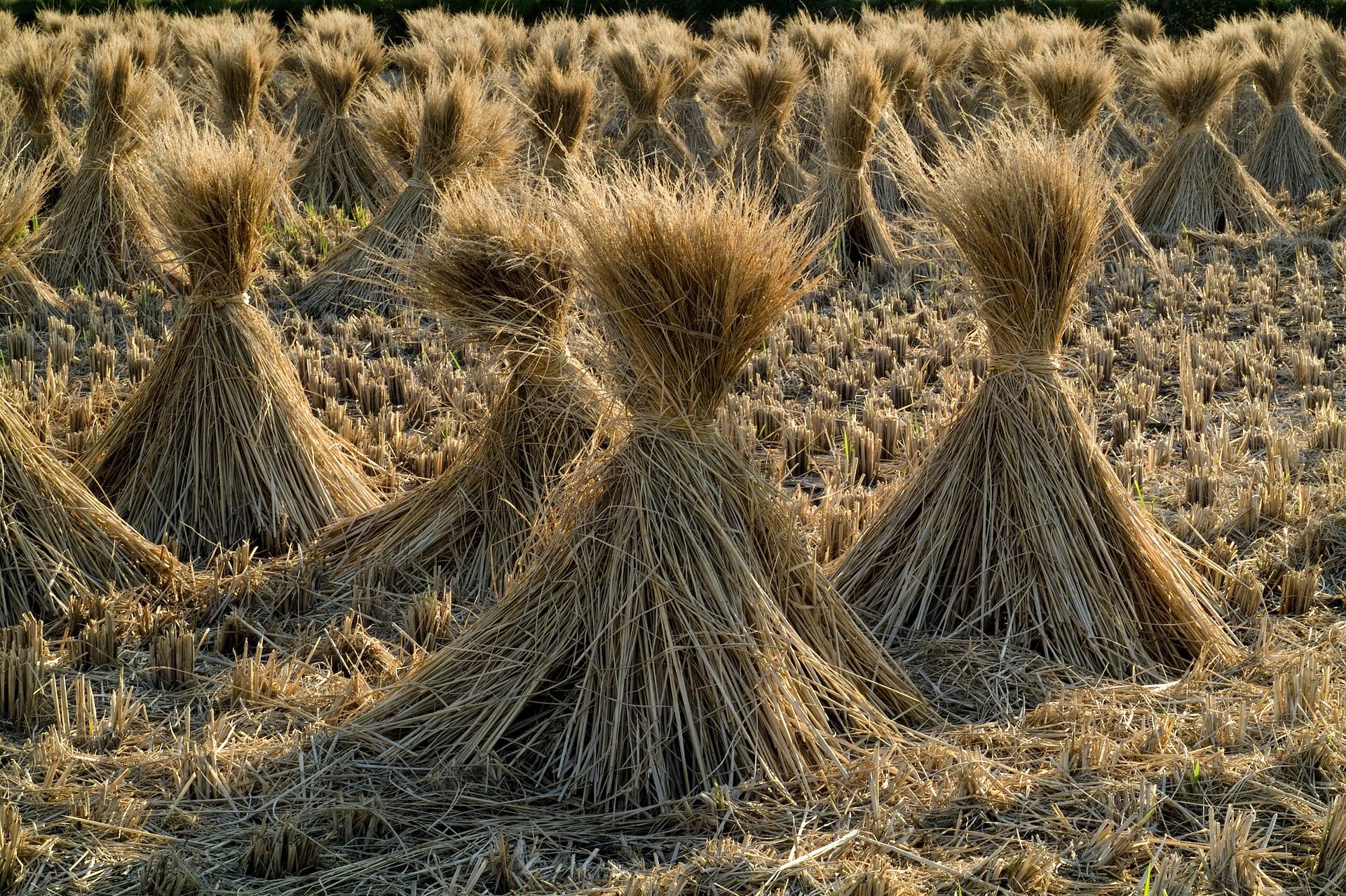 Притча о сене