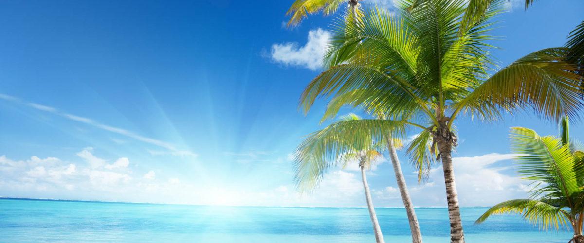 Библия и пальмы